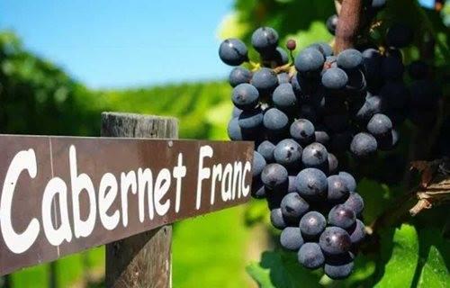 cabernet-franc-2019